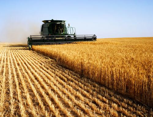 A Contabilidade no setor rural