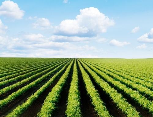 A Contabilidade para o Desenvolvimento do Agronegócio
